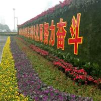 江西省哪里有三色堇石竹甜菜金盏菊冬季草花