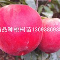 桃树苗批发价格 占地桃树苗批发 梨树苗