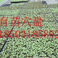温室苗床必备配件-育苗穴盘-增产增效