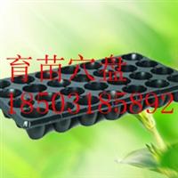 河北温室苗床必备配件-育苗穴盘-增产增效