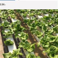 PVC立体草莓种植-高效-节能-无污染