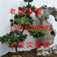苏州庭院设计施工、苏州庭院别墅苗木工程