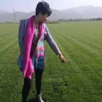 早熟禾草坪供应