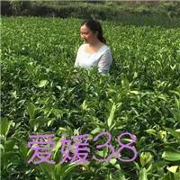 2018年湖北红心蜜柚8元-10元
