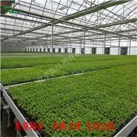 吉林白山农业大棚移动苗床网未来发展前景
