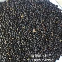辽宁省黄菠萝种子价格一览表