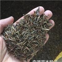 辽宁省四季丁香种子价格一览表