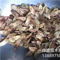 五角枫种子一亩地播种量