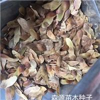 辽宁省五角枫种子价格一览表厂