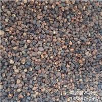 东北马莲种子价格一览表