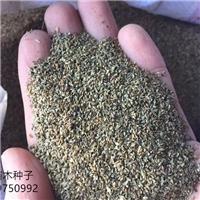 辽宁省锦带种子多少钱一斤