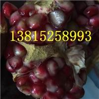 苏州石榴树,水晶石榴,红石榴,大型石榴树桩