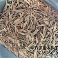 糖槭种子多少钱一斤