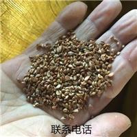 辽宁省山荆子种子价格一览表
