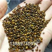 辽宁省沙棘种子价格一览表厂
