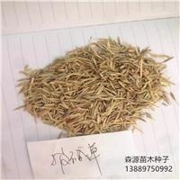 今年披碱草种子多少钱一斤