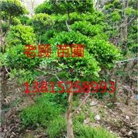 苏州私家绿化,景观工程设计,苏州园林绿化