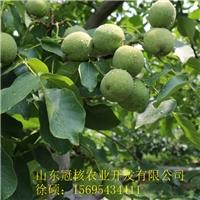冠核农业秋冬季节栽植预定准备进行