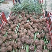 ��竹、紫竹基地100�f供��、2公分2.2元上�