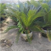 公�@庭�@�^�~植物�K�F多�格低�r供��