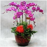 北京花卉租摆养护