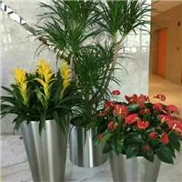北京花卉租摆公司