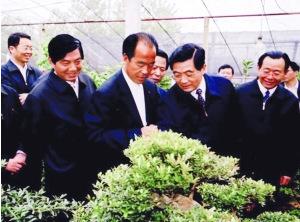 沭阳县华达绿化苗木园艺场