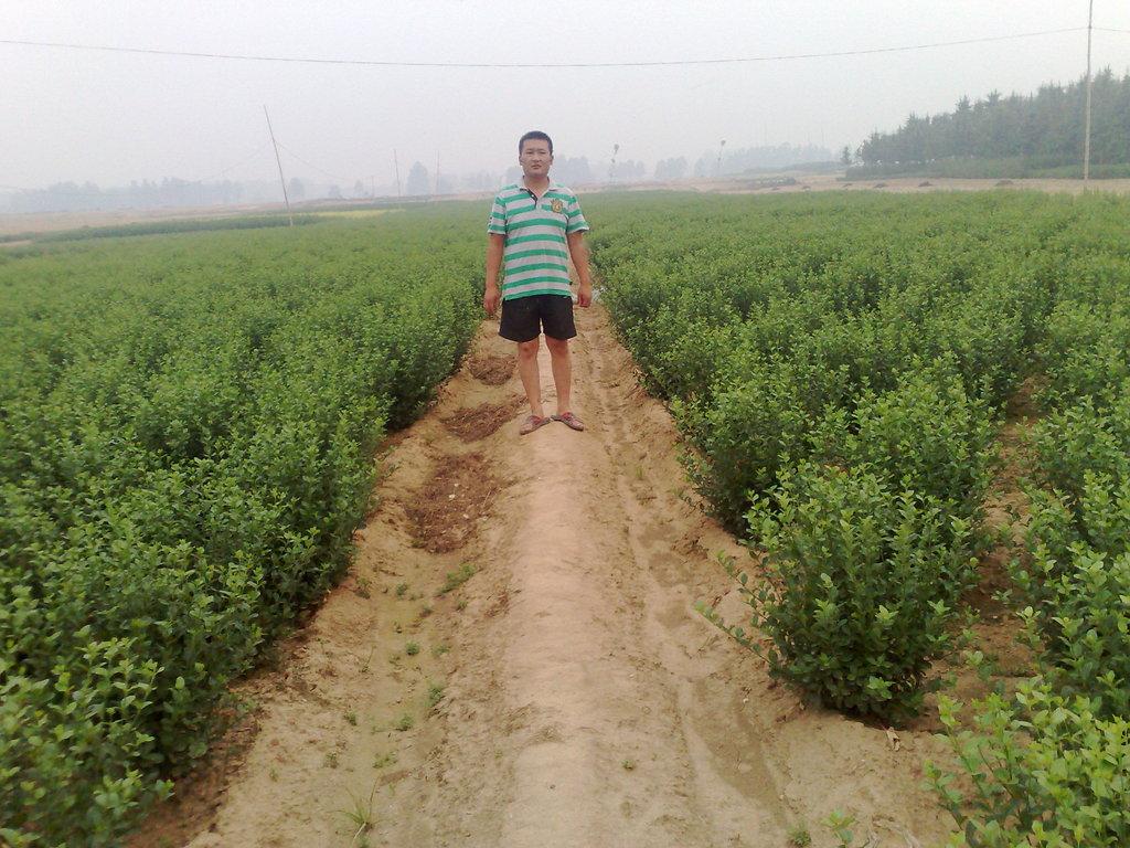 沭阳县军海花木园艺场