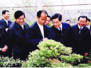 沭阳三棵树苗木园艺场