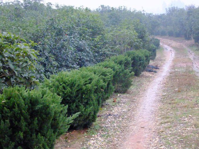 浏阳市柏加渡头园林绿化苗圃