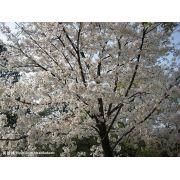 陕西小丽苗木花卉公司