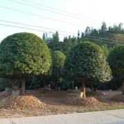 广西桂林常青花木园
