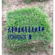 湖南郴州绿溪草皮苗木基地