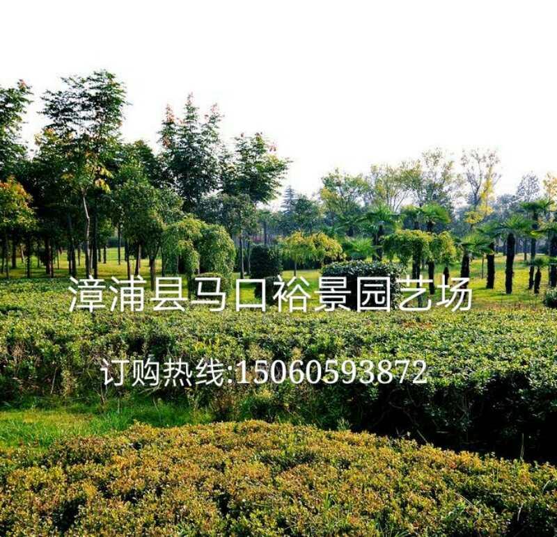 漳浦县马口裕景园艺场
