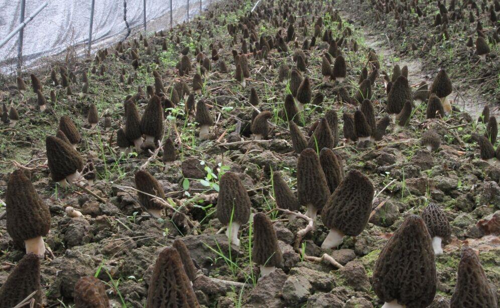 贵州成宇益丰生态农业发展有限公司