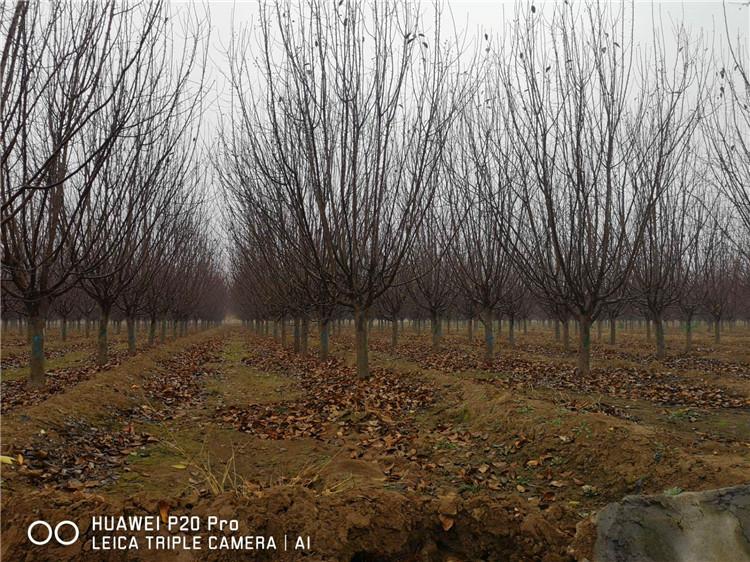 山东辰枫园林绿化工程有限公司
