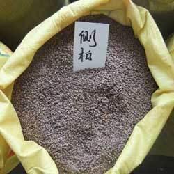 绿化常绿小乔木种子 小松柏种子 侧柏种子 扁柏种子 可嫁接龙柏