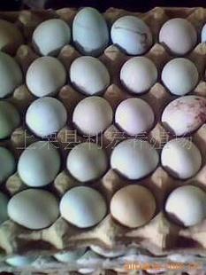 批发供应绿壳散养鸡蛋、土鸡散养鸡蛋、江西利宏家禽批发供应