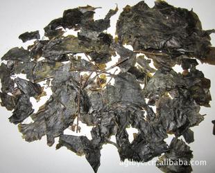 毛冬青叶|苦丁茶|冬青叶|产地直销茶叶毛冬青叶