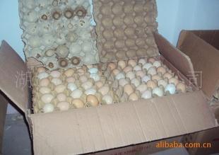 青脚土鸡种蛋,保证90%以上的孵化率
