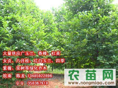 合肥红白玉兰、宣城、安庆、铜陵、六安、巢湖红、