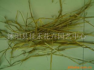 供打包小麦秸秆、打包稻草秸秆、粉碎小麦秸秆(图)