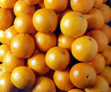 供应麦科特苗 木菠萝 红心橙苗