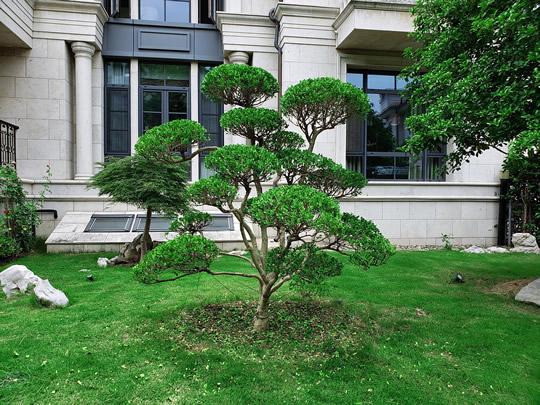 苏州别墅景观设计、庭院设计公司