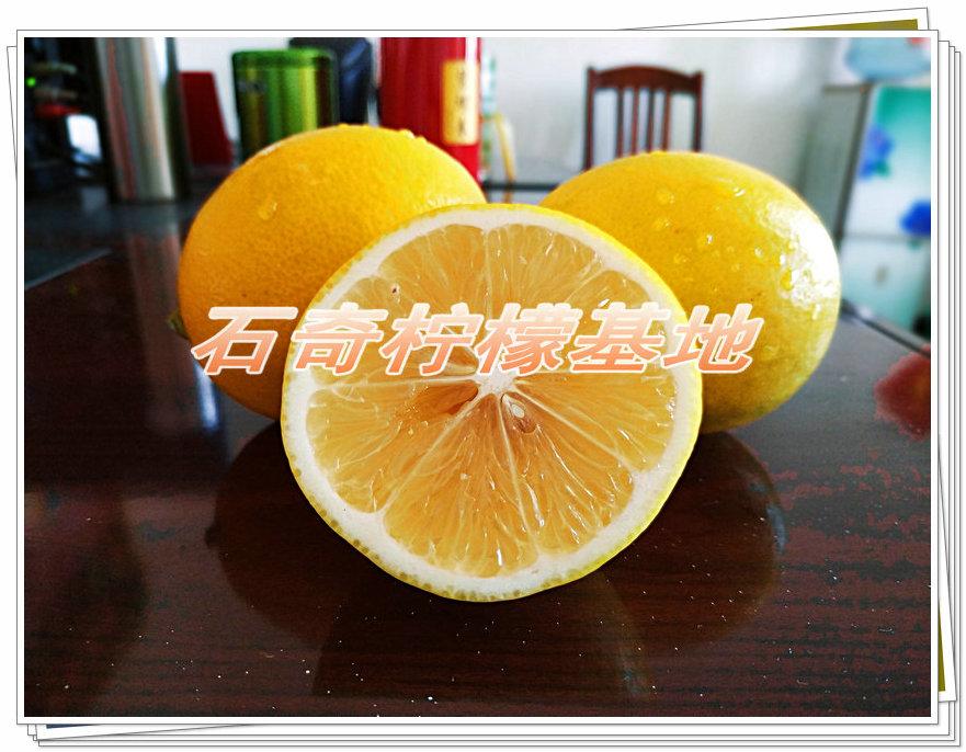 供应正宗台湾金丰柠檬