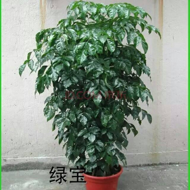 北京室内花卉租摆公司