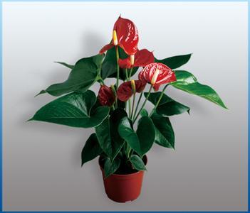 北京花卉租赁公司花卉销售