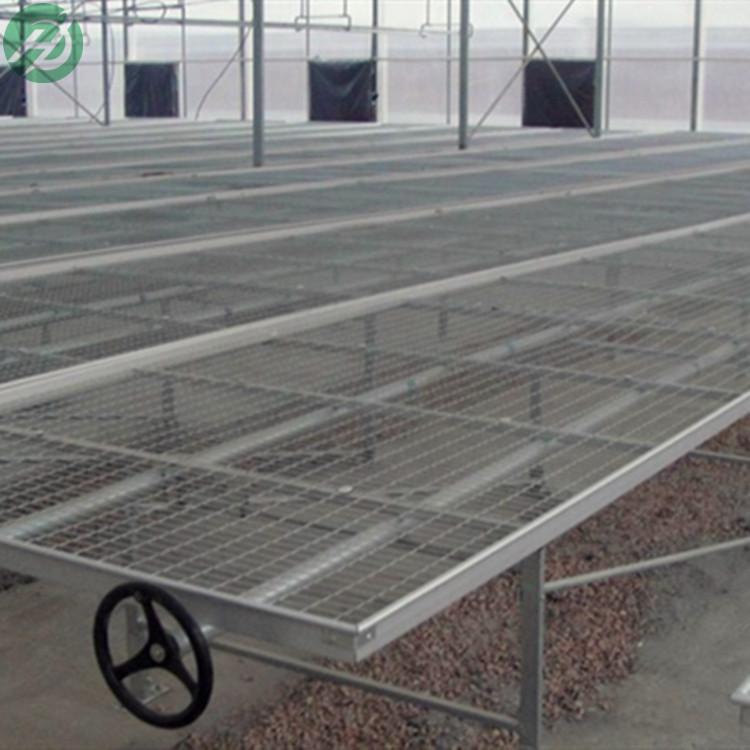 斑点蝴蝶兰育苗床线条兰种植板苗床批发出售