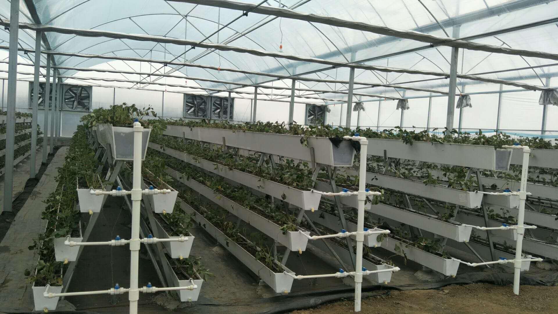 草莓育苗架-草莓槽-苗床厂家特价供应