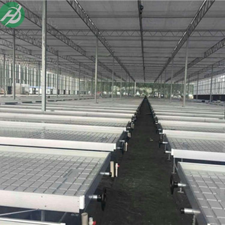 君子兰育苗种植床奇异兰灌溉式苗床 直销